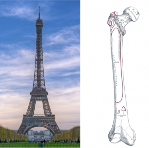 eiffel-tower-bone